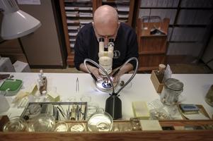Snigelexperten Ted von Proschwitz., biolog och snigelexpert på Göteborgs Naturhistoriska museum. Han har skrivit boken