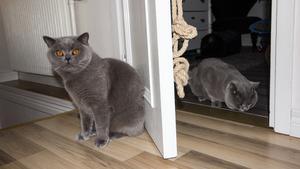 Bernhard (till vänster) och halvbrorsan Harry kommer oftast överens men ibland kan de ryka ihop också.