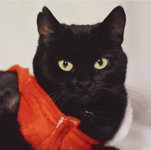 340) Lilith skulle skjutas och blev adopterad av mig från misär och har snabbt blivit min bästa vän. Förra julen tänkte jag att hon skulle bli julfin, så jag köpte en juldress till henne. Den var inte uppskattad av henne, men åtminstone av mig! Hon är så söt i den, dock är den snäppet för liten... Foto: Caroline Heldt