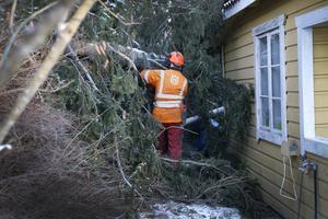 Många träd har också fallit runt huset i Skeppsmyra. Leif Lindblad kapar grenar för att mobilkranen ska kunna lyfta bort den stora granen utan att få med sig delar av huset.