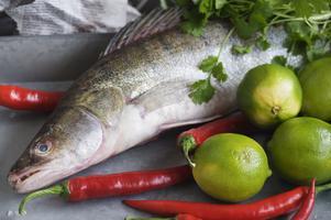 Gös är en god matfisk, men arten är hårt ansatt av fisket. Foto: TT