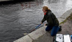 Maria Carlsson tar ett prov vid en av mätningsstationerna.