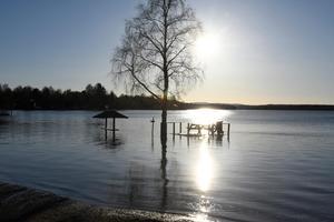 Särnasjön stiger nu kraftigt.