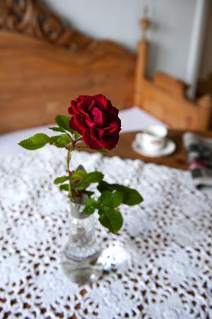 Sommarens sista ros.