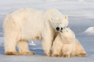 Debattören skulle vilja att klimatskadlig mat som kött beskattas för att till exempel öka möjligheterna för isbjörnarna att överleva.