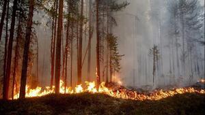 Sedan i söndags har bränder härjat på flera håll i Hälsingland. Flera styrkor från olika håll i Sverige är på plats för att hjälpa till. Foto: Kurt Holm/räddningstjänsten
