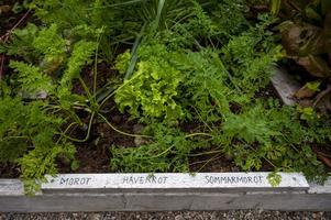 På odlingslådorna finns det skyltar som berättar vilken gröda som odlats.
