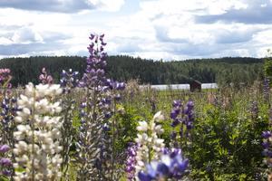 Utsikten från torpet i Västra Höle.