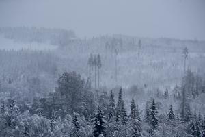 Skogsutredningens förslag kan få långtgående konsekvenser och utarma glesbygden, skriver Tobias Jönsson och Pelle Sallin. Foto: Mats Andersson / TT