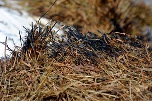 Fortsatt ökad risk för gräsbrand i Dalarna.