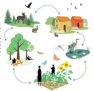 ... med tydliga entréer, bättre belysning och skyltning av befintliga grönområden och skapandet av nya mötesplatser så att människor och djur kan röra sig i en sammanhängande grönstruktur.