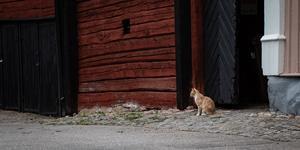 Portvakt. Utställningsfoto av Tomas Ericsson, Köpings Fotoklubb (Bilden är beskuren)