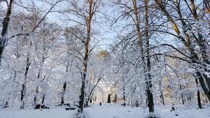 Vinter på Djäkneberget på Nobeldagen 2019. Bilden inskickad av Ewa Norsäter.