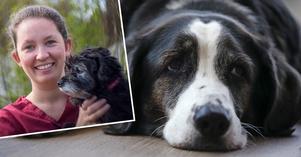 Veterinär Mari Håkansson och arkivbild av hund (hunden är inte en av de som har insjuknat i Norge).