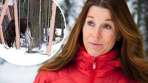 Magdalena Forsberg berättar om mötet med älgen.