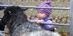 Vera Stjernfeldt, 1,5 år, klappade får på Bondens dag i Arboga.