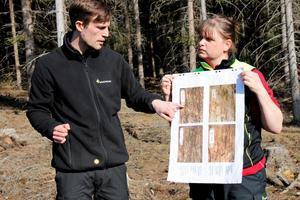 Snabbt förlopp. Bilderna som Emil Hjerpe och Monica Pettersson håller upp visar granbarkborrarnas spår från första spåren i början av maj till larvernas omfattade gnagskador i början av augusti.