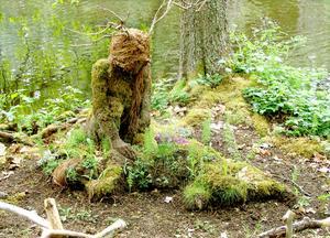 Ida Rosén Branzells konstverk Fylgian i Skulpturparken i Ängelsberg som är byggd av jord och grenar från Fellingsbro. Foto: Privat.