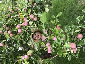 Ebba 2 år vid vårt äppelträd.Foto: Elin Broström