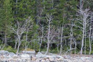 Myrskär är den senaste ön i raden där skarv etablerar sig.