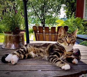 81) En bild från i somras när kattungen ligger och myser i värmen i skuggan.☀️ Foto: Anton WEestberg