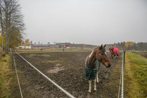 Två av de 46 hästarna som finns på Frösö Ridcenter.