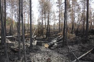 Branden i Ljusdal är den största i modern svensk historia.