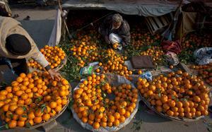 Citrusförsäljare på en marknad i pakistanska Rawalpindi. Över 20 procent av Pakistans totala handel går till EU. Foto: Anjum Naveed/AP Photo