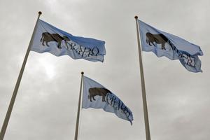 De tre flaggorna med Gårdö mejeris nya logotyp vajade i vinden under måndagen.