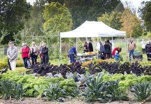 SKÖRDEFEST. Det bjöds allehanda grönsaker och blommor till försäljning i anslutning till trädgårdslanden.