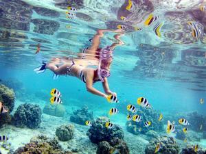 Ibland när man snorklar kan det vara som att simma runt i ett akvarium. Bilden är tagen på ett rev på Huahine i Franska Polynesien.