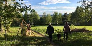 """""""Vildmarksparken, skogsbrynet. En fantastisk plats för oss alla"""", skriver Mats Mäki."""