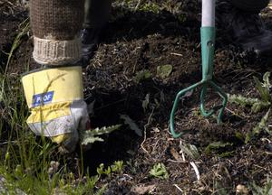 Rensning av ogräs i trädgårdsland.Foto. Hasse Holmberg / SCANPIX /