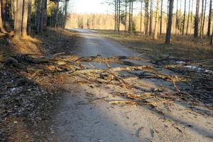 Den hårda vinden hade fällt mycket skog i Hjortkvarn, till exempel rakt över vägen till Hjortvallen.