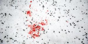 Blodspår efter nattens stora gängbråk i Falun.