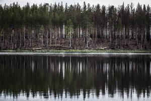 Aborrtjärn vid Enskogen.