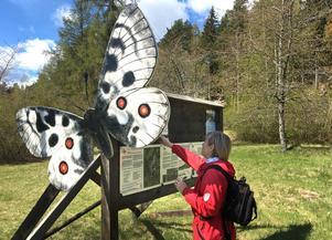 Fjärilsvandringen i Stora Vika börjar vid anslagstavlan som pryds med en apollofjäril.