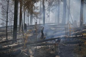 Skogsbränder härjade i Björbo, Gagnef. Bild: Fredric Gustafsson/Foto-Mike