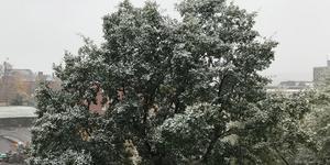 Snön låg vit på träden i centrala Sundsvall under söndagsmorgonen.