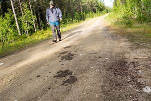 Det tog ett tag att lokalisera koflocken som inte var riktigt där Henrik Svensson trodde. Men spåren av kobajs talade sitt tydliga spår och till slut hittades korna.