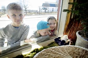 Harry Nornholm, 9 år, Tilde Westrin, 7 år och Matilda Nornholm, 7 år kikar in på kycklingarna.