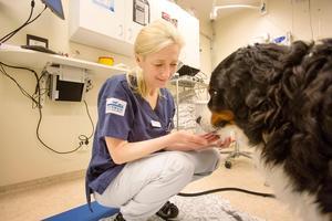 Ann Essner vill att forskningen ska bedrivas så nära som möjligt där resultaten av den ska användas. Här på kliniken i Gävle har en stor del av hennes forskning gjorts.