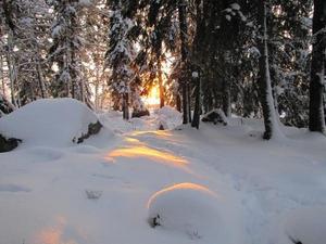 Solnedgång i skogen en iskall vinterdag. Kortet taget i Surahammars naturreservat Kohagen där jag tycker om att promenera.Catharina Lindberg, Surahammar.