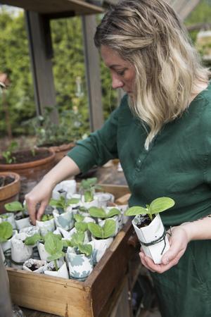 Vackra krukor gjorda av tapetprover är pumpornas första hem innan plantorna kan flyttas ut i trädgården och förhoppningsvis bli lika stora och vackra som i Italien.