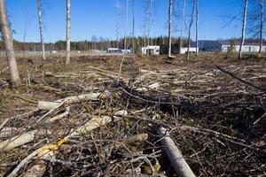 Avverkningen vid Masbo IP i Skinnskatteberg har endast lämnat ett fåtal träd kvar.