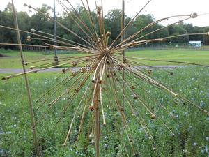 Den här snygga fröställningen såg jag i Rosendals trädgård.Det är läckert när växter får vissna ner och stå kvar över vintern!