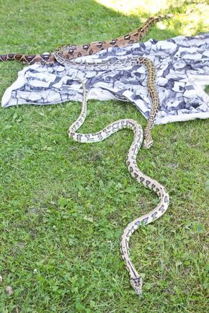 Ormarna som var lösa på Löga strand.