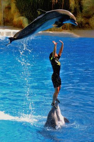Ser ut som hon jonglerar med en delfin..kanske en synvilla?Det hände på Teneriffa.