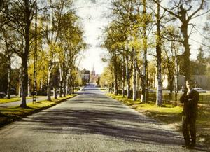 Promenaden 1969. Jan Rune poserar. Björkarna stod vita och gatan tillhörde landets vackraste.