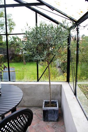 Växterna trivs jättebra i växthuset.